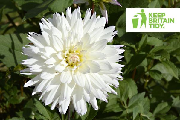 White Flower - Creating Kerb Appeal
